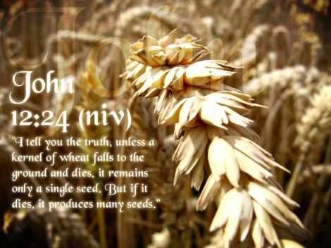 WheatKernelJohn1224
